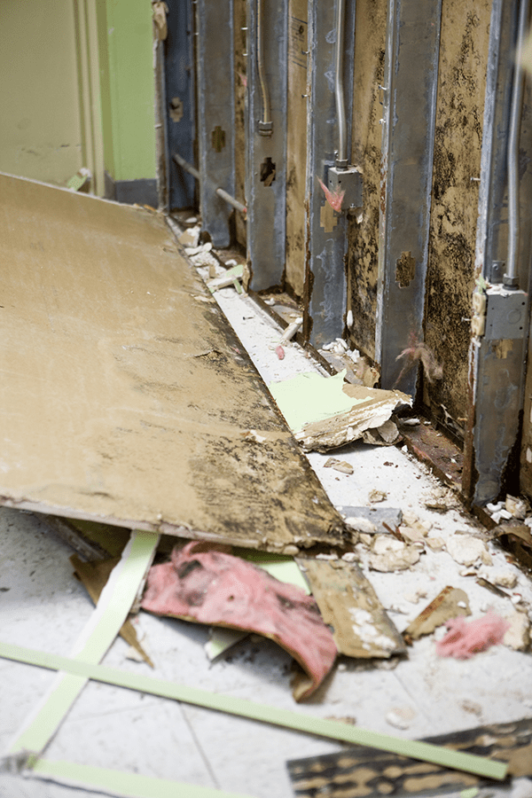 structural mold damage to a laundromat